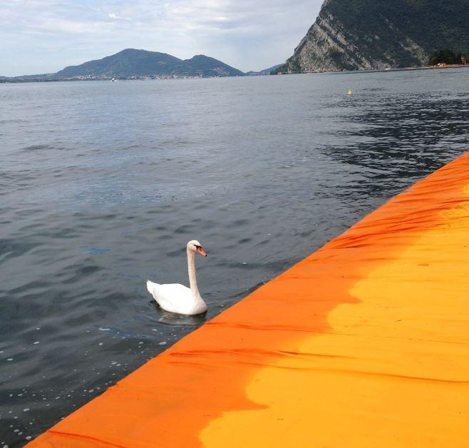La partecipazione della natura al progetto The Floating Piers è il risvolto più suggestivo dell'opera.