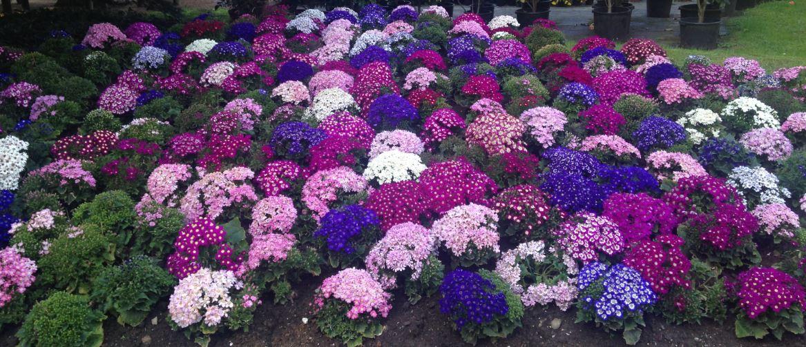 La guida all'entrata del parco vi dice esattamente quali piante sono in fioritura